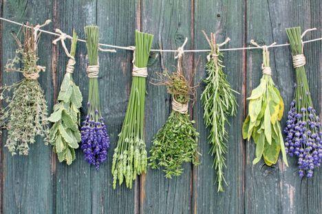 száradnak a gyógynövények