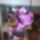 Sárközi Edina orchideái