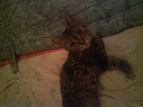 az én kis cicám