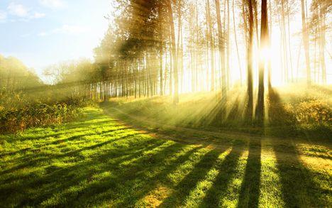 Napkelte erdőben