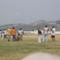 Sétarepülés és gyereknap 2008 a budaörsi reptéren 10