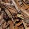 Szorgos hangyák