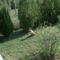 Látogató a kertben