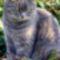 Maci cica 1