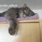 Maci cica 2