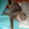 Maci cica 6