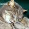 Maci cica 9