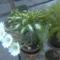 Kaktusz1