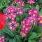 Koratavasz  virágai