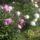 Virágok, fák