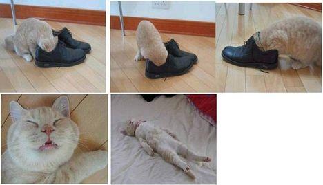 Cica és a cipő
