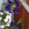 Ki a virágot szereti,rossz ember nem lehet... 1