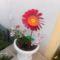 Ki a virágot szereti,rossz ember nem lehet... 4