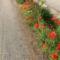 Ki a virágot szereti,rossz ember nem lehet... 6