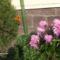Ki a virágot szereti,rossz ember nem lehet... 8