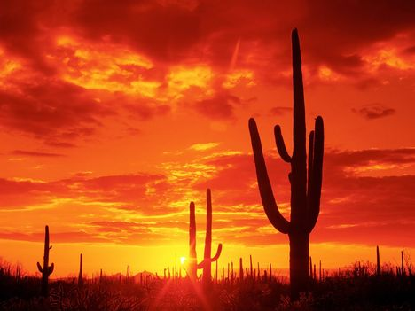 Burning_Sunset,_Saguaro_National_Park__Arizona