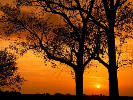Elm_Trees_at_Sunset,_Illinois