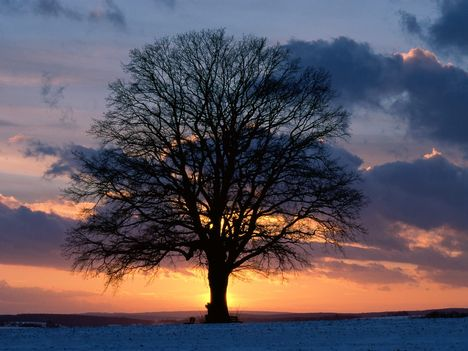 Lone_Tree_at_Sunset