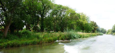 Mosoni-Duna jobb part a Mosonmagyaróvár, Rév utca mögötti szakaszon, 2017. július 25.-én