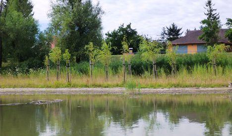 Mosoni-Duna Mecsér község belterülete melletti szakaszon, Mecsér 2017. július 26.-án 28