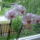 Orchideam_242799_42445_t