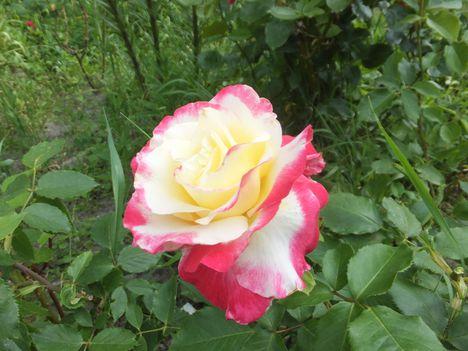 virág 22