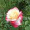Virag_22_2042069_3554_s