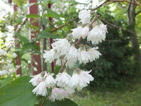 virág 24