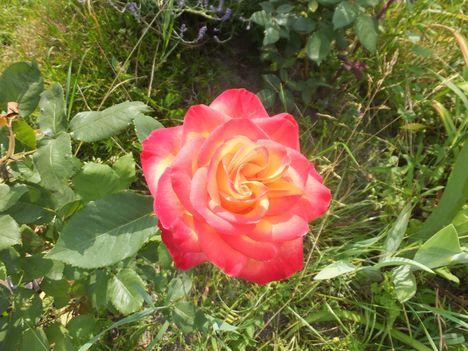 virág 26