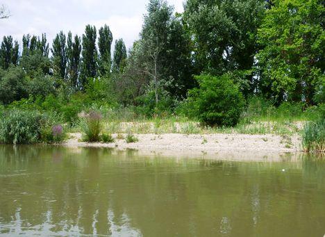 A Mosoni-Duna jobb part a Lajta torok alatti szakaszon, Mosonmagyaróvár 2017. július 25.-én 1