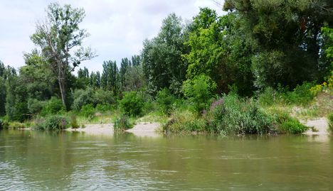 A Mosoni-Duna jobb part a Lajta torok alatti szakaszon, Mosonmagyaróvár 2017. július 25.-én 2