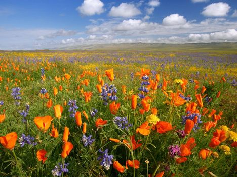 Carrizo_Plain_National_Monument,_California