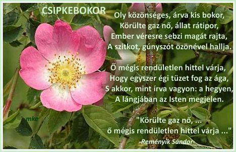 Reményik Sándor -Csipkebokor