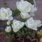 fehér tulipánok 2009