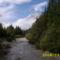 folyó és az erdő