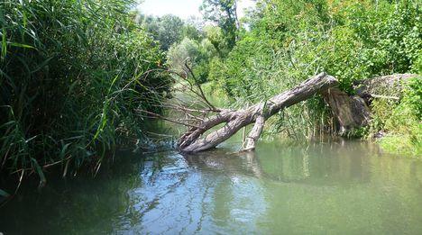 A Kálnoki Duna-ág torkolati szakasza, Kimle és Máriakálnok közigazgatási határán 2017. július 25.-én 2