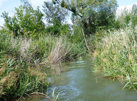 A Kálnoki Duna-ág torkolati szakasza, Kimle és Máriakálnok közigazgatási határán 2017. július 25.-én 3