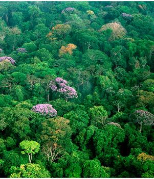 Amazonas 7