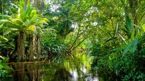 Amazonas 8
