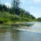 Magyarkimlei vizes élőhely a Mosoni-Duna jobb partján, 2017. július 25.-én 3