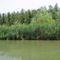 Mosoni-Duna bal part a duzzasztómű feletti vizes élőhely melletti szakaszon, Mosonmagyaróvár 2017. július 25.-én