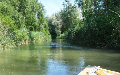 Mosoni-Duna Cvika-szigeti mellékága, Kimle 2017 július 25 (1)
