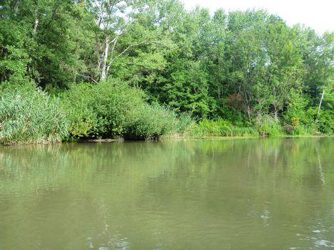 Mosoni-Duna bal part a Nováki csatorna torkolatánál, Mecsér, Kimle és Hédervár határán 2017. július 26.-án