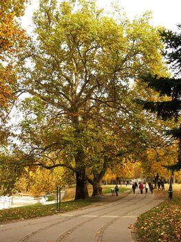Városliget fái ősszel