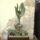 Kriszti kaktuszai