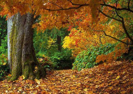 Ó, hogy szalad az ősz. Dáma Lovag Erdős Anna verse: