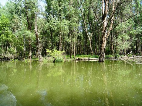 Rigószigeti Duna-ág az Ásványi mellékágrendszerben, Ásványráró 2017. május 18.-án 5