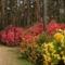 Rododendro 3
