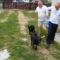 A fiatal kuty sok törődést, tanítást igényel, de a szeretetet mindkettő egyformán kapja!