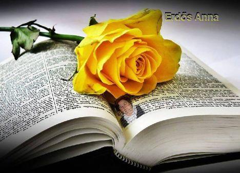 A könyv..:Dáma Lovag Erdős Anna